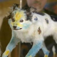 Dead Dog Art