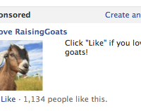 I didn't even know I loved goats until Facebook made me aware of it. It's eerie how they know me better than I know myself...