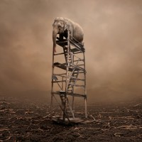 """""""Lost"""" - elephant on wooden ladder - surreal #Photoshop scene [ via @pourmecoffee ]"""